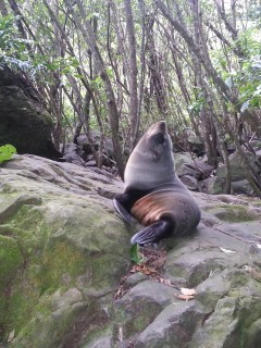 The baby seals at Ohau Point
