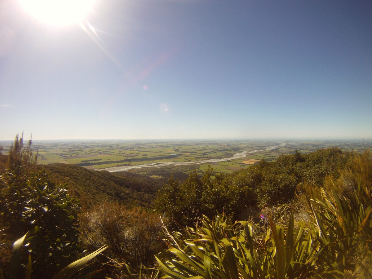 The view of the Rangitata from the bushline