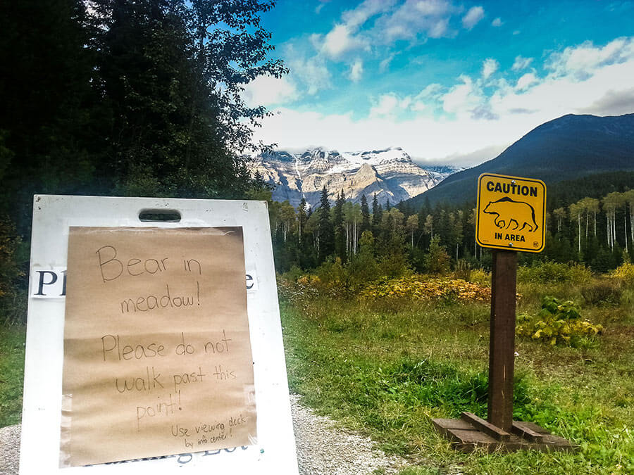 The bear warning sign in the meadow at Mt Robson Visitor Center.
